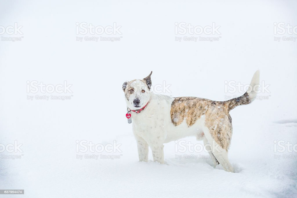 Dog Standing In Snow stock photo