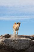 dog standing on rocks
