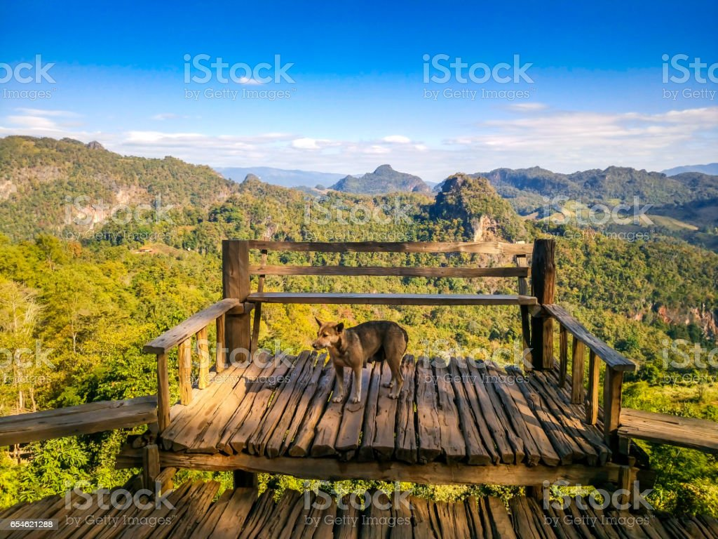 Dog standing on the mountain brink with panorama view stock photo