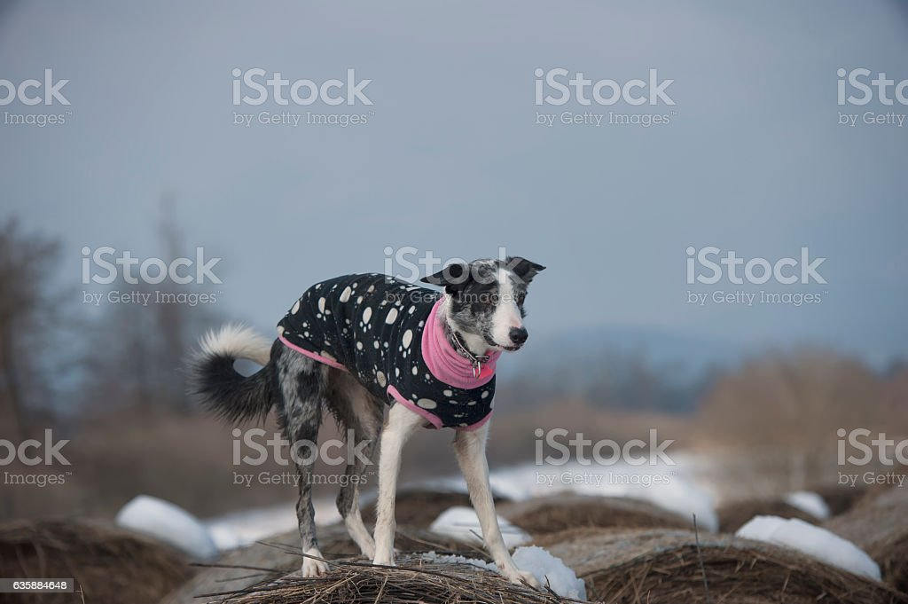 Dog standing stock photo
