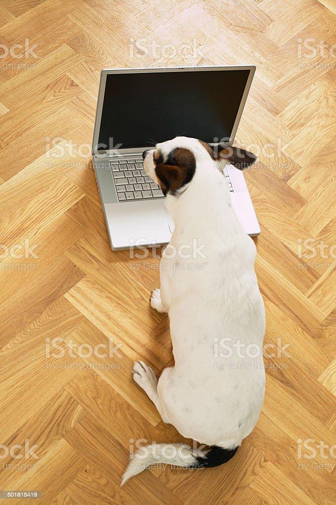 Chien regardant sur un ordinateur portable photo libre de droits