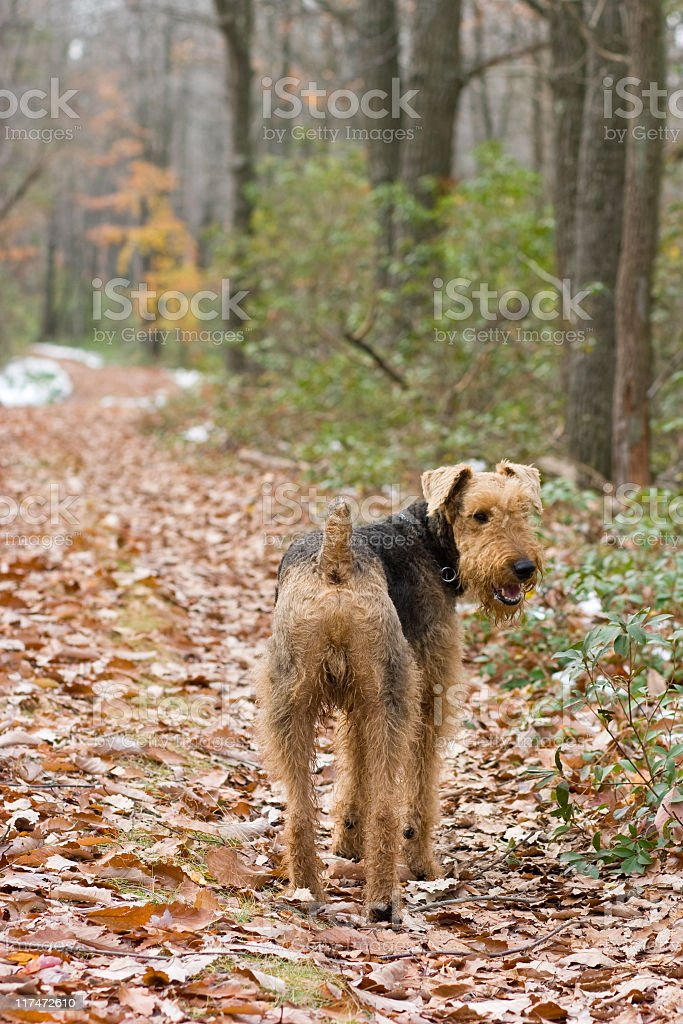 Dog stay on the forest's trail stock photo