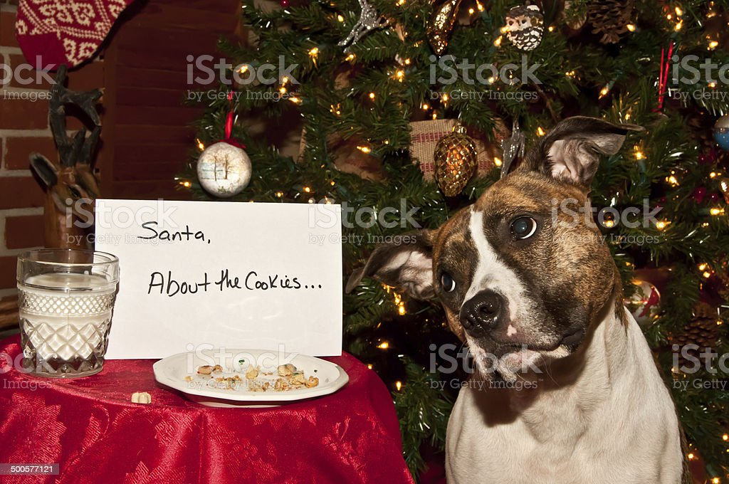 Dog Steals Cookies stock photo