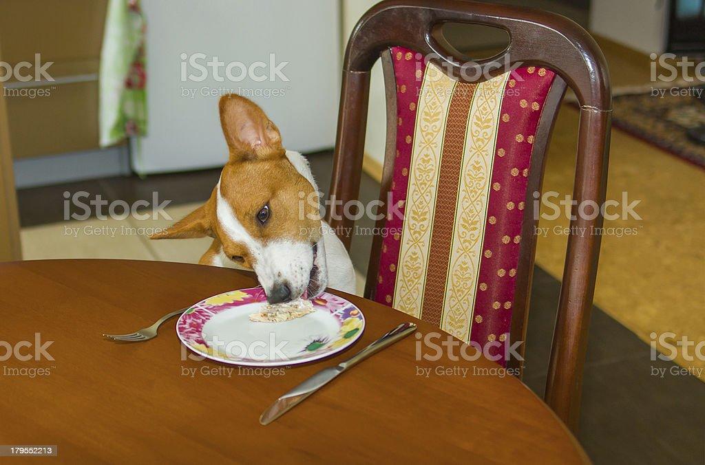 Dog steeling food royalty-free stock photo