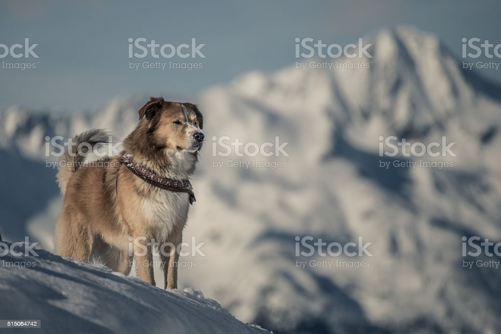 dog strikes a pose stock photo