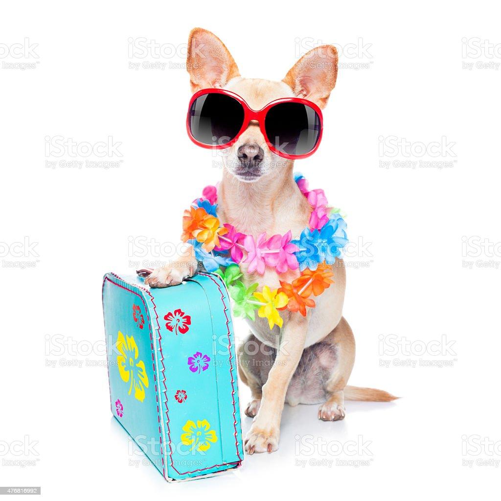 dog summer holidays stock photo