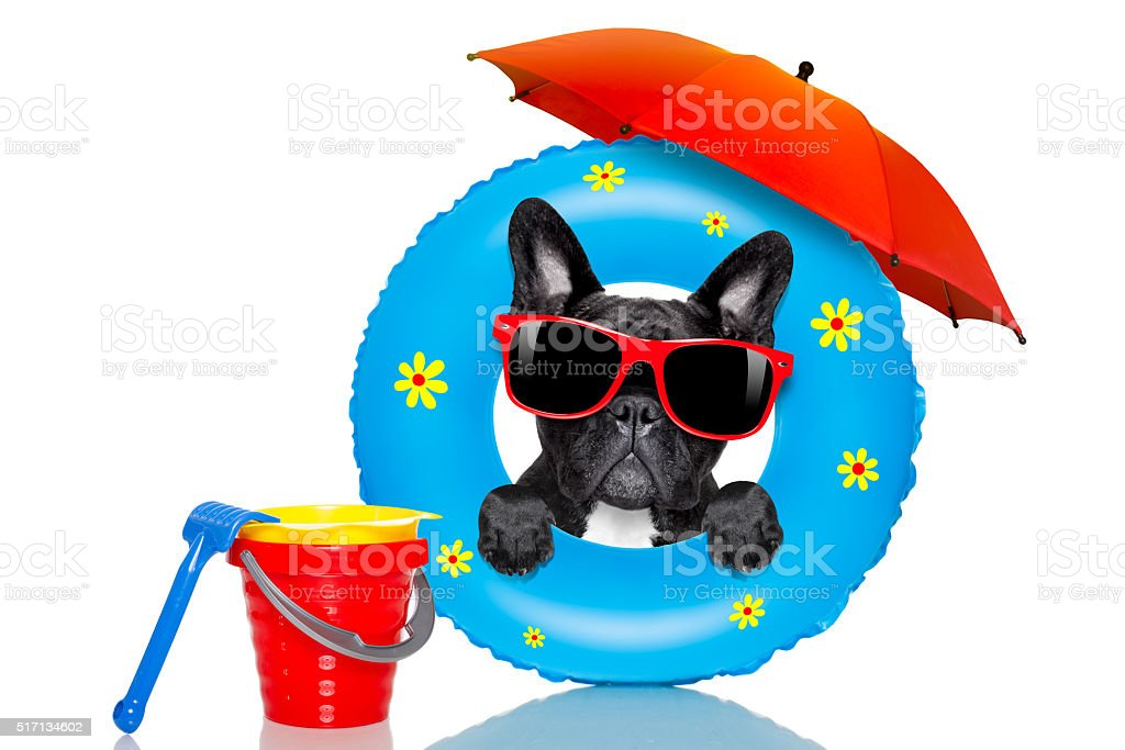 dog sunbathing with  air mattress in summer stock photo
