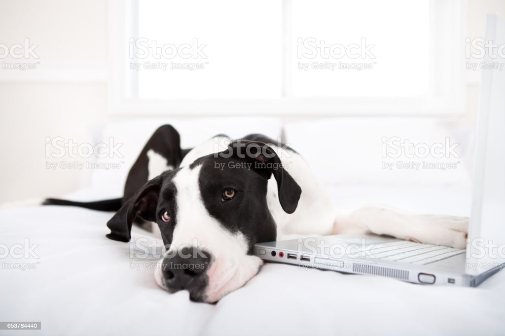 Dog surfing the internet stock photo