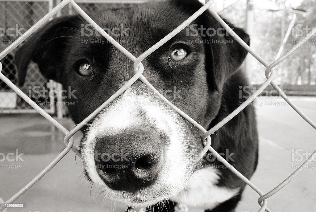 Dog, take me home stock photo