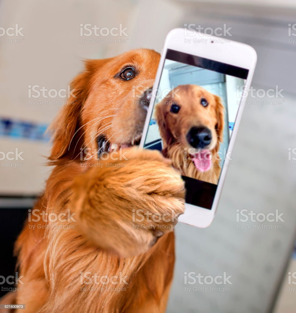 Dog taking a selfie stock photo