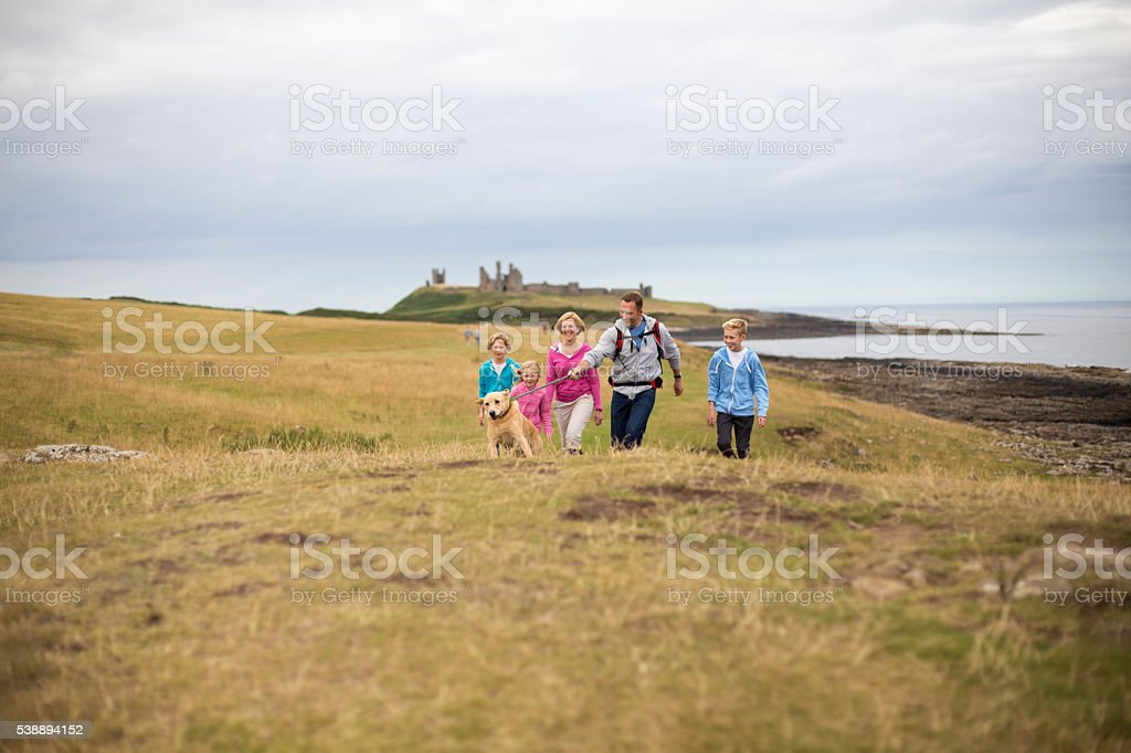 Dog taking its owners for a walk stock photo
