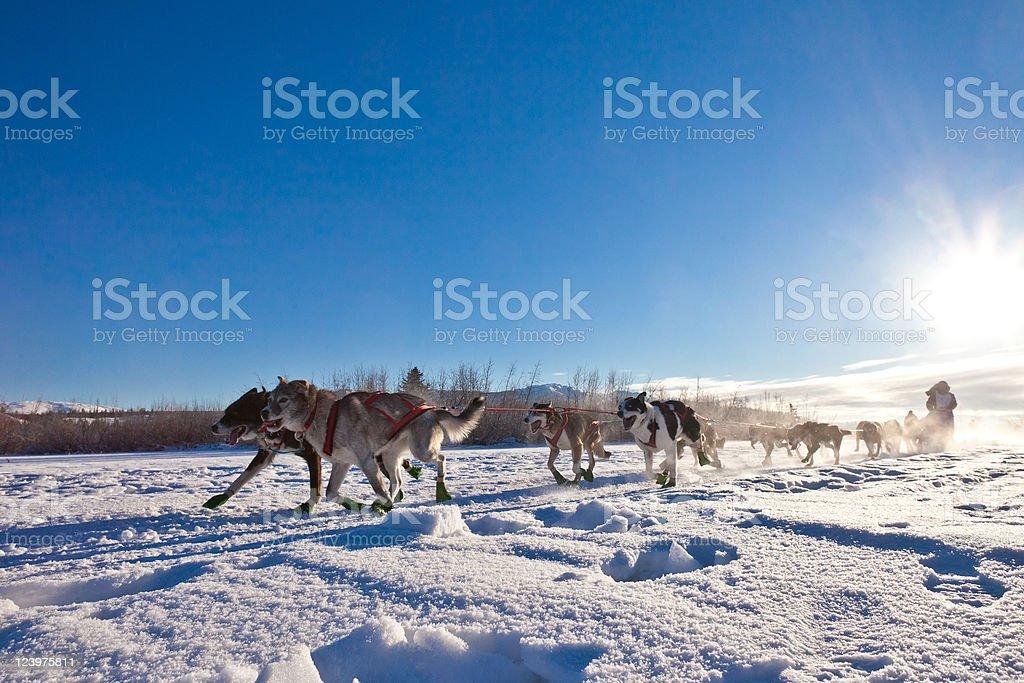 Dog team pulling sled royalty-free stock photo