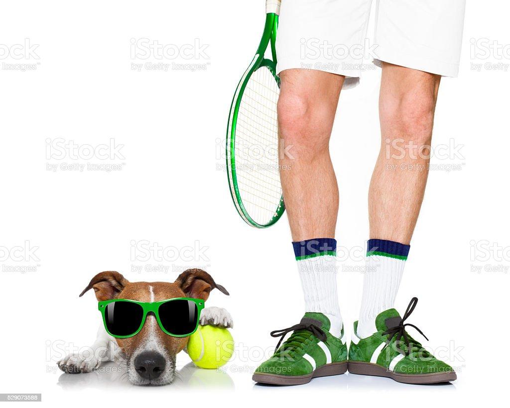 dog tennis ball player stock photo