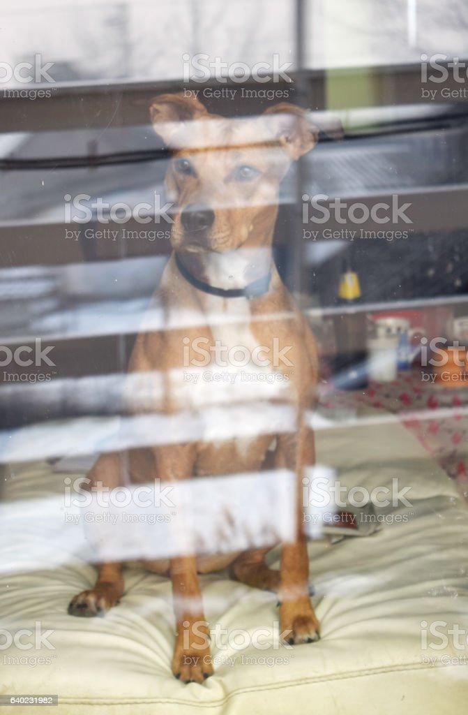 Dog through a glass stock photo