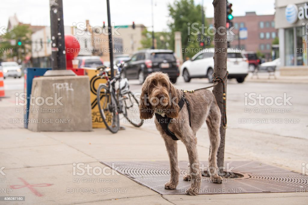 Dog tied to a pole in the city. stock photo