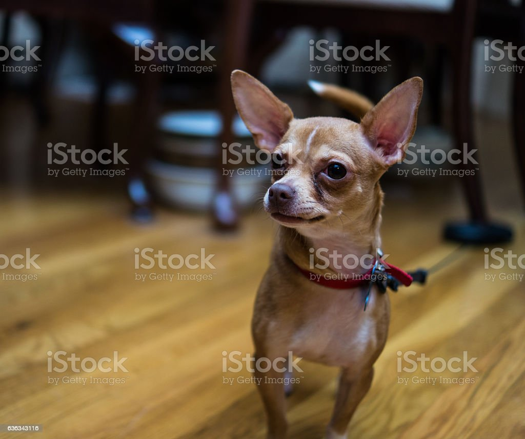 Dog tied up and looking at something stock photo