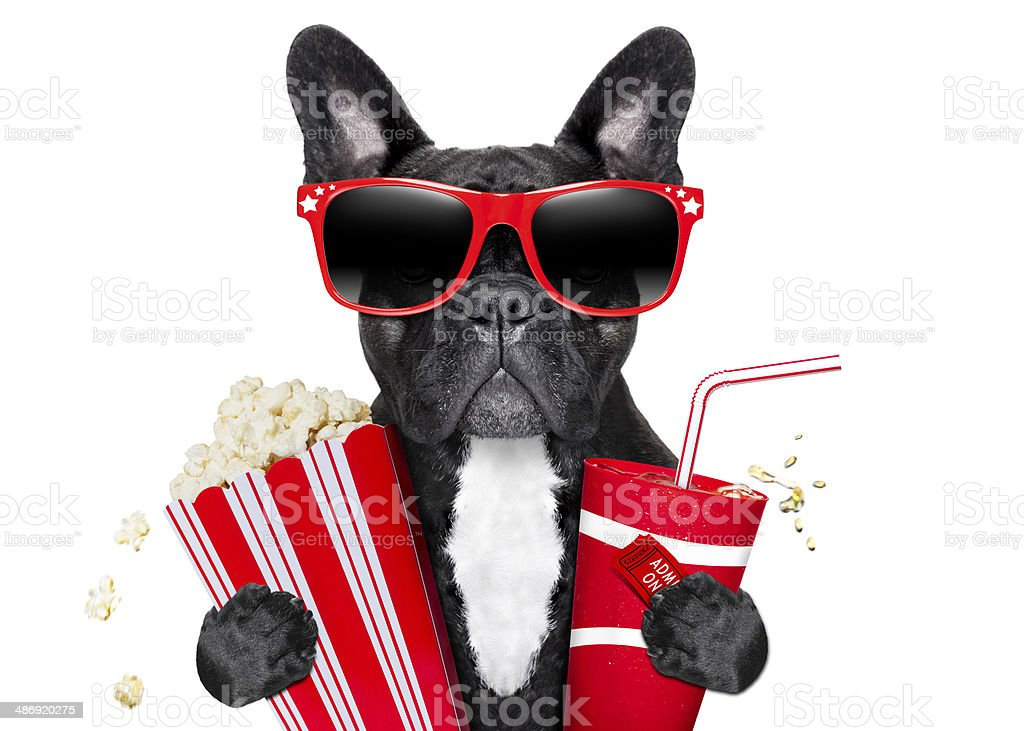 dog to the movies stock photo