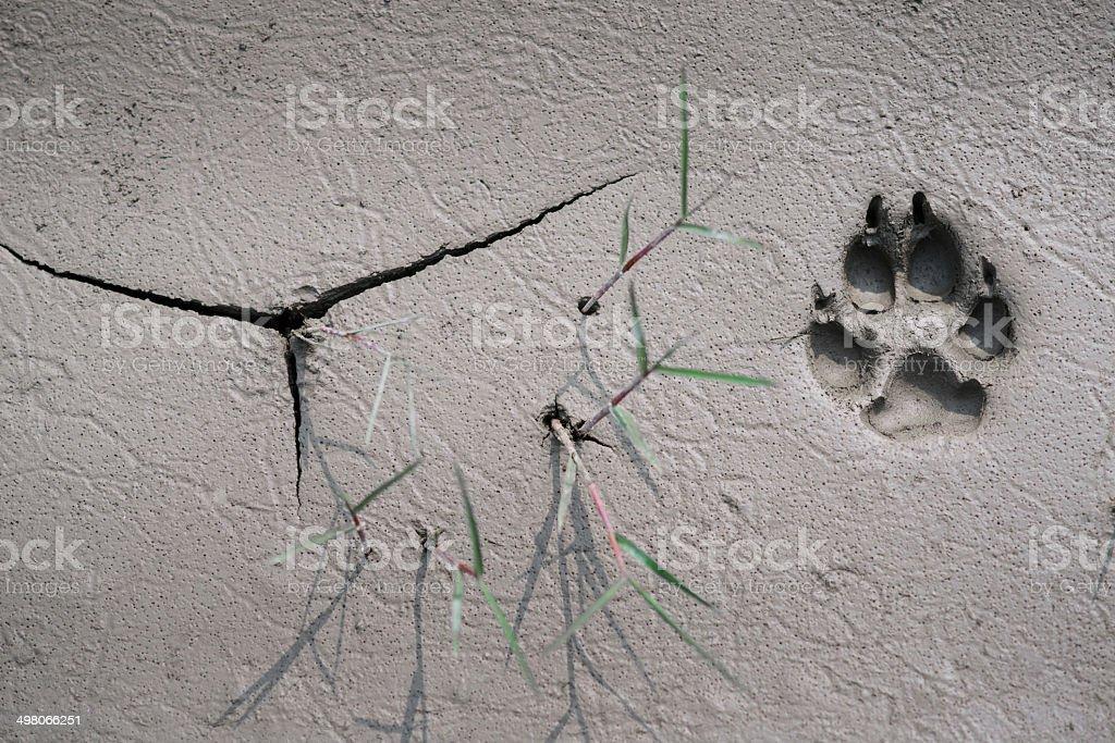 dog track on mud stock photo