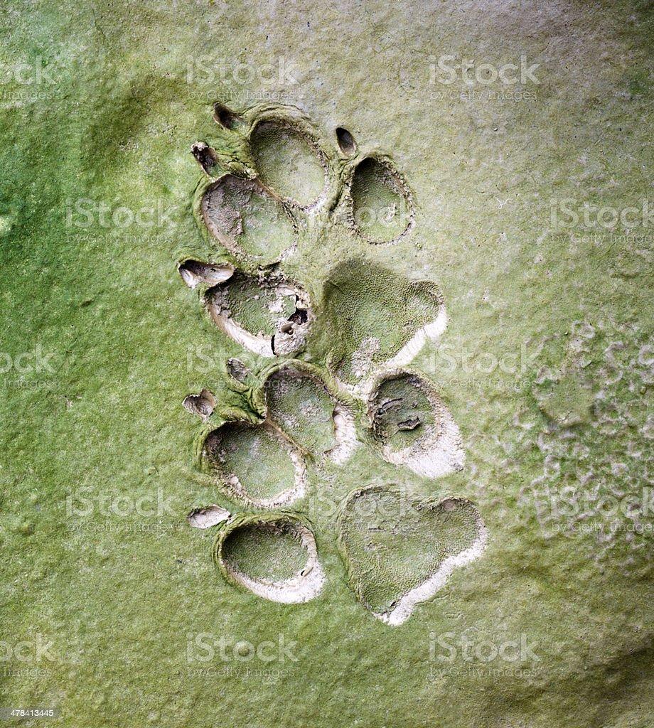 dog  tracks in cracked mud royalty-free stock photo