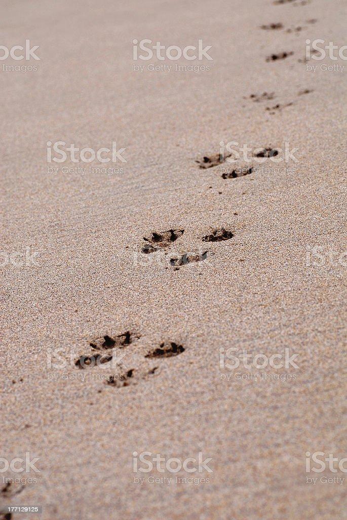 Dog Tracks royalty-free stock photo
