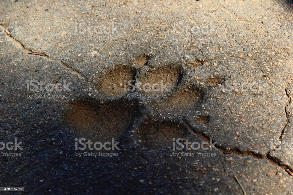 Dog trail stock photo