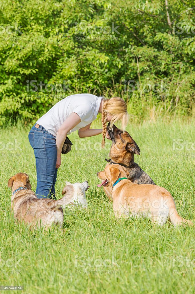 Dog trainer obedience stock photo