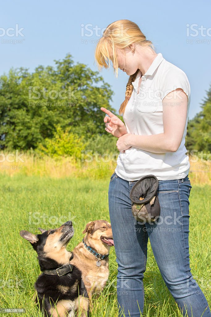 Dog trainer teaching dogs 1 stock photo
