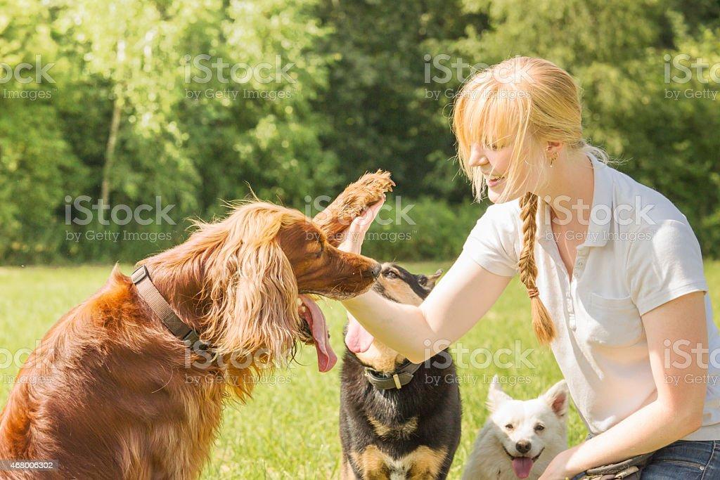 Dog trainer teaching dogs stock photo