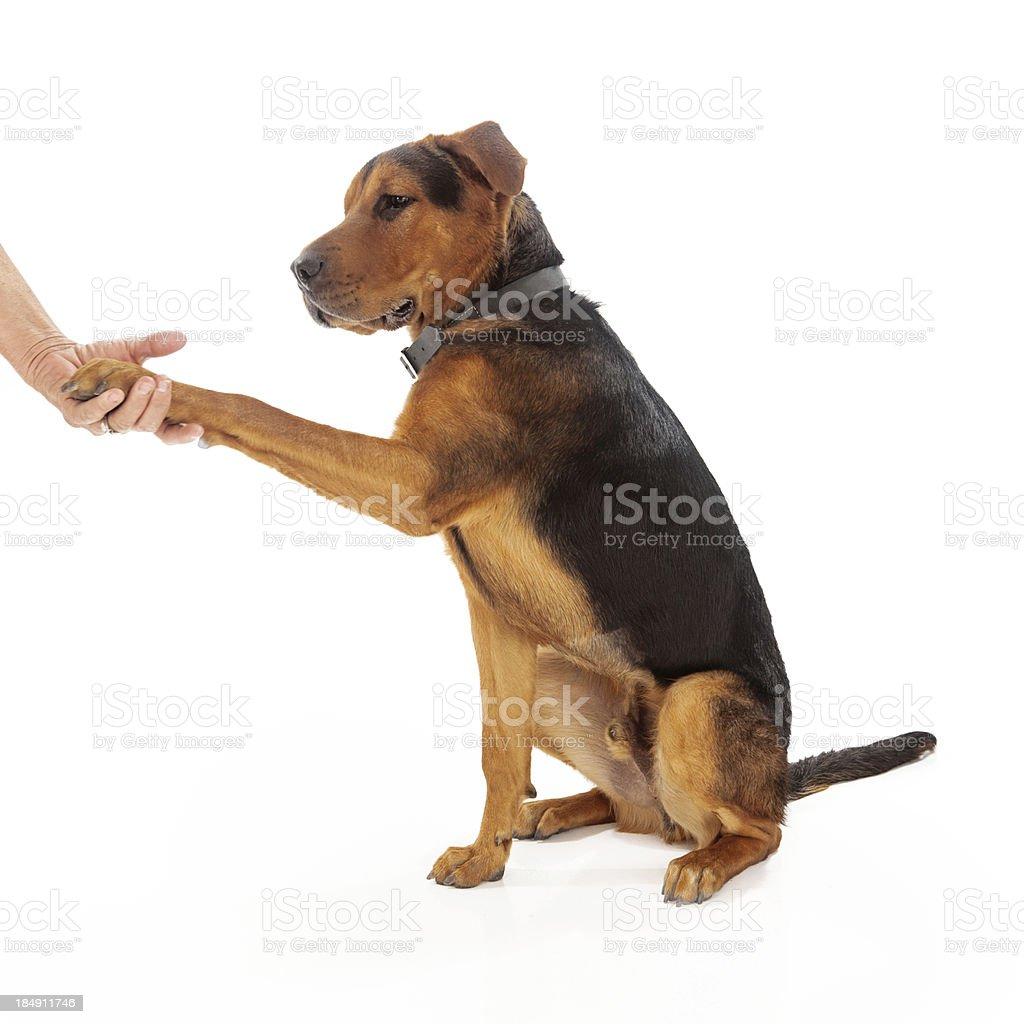 Dog Training Handshake royalty-free stock photo