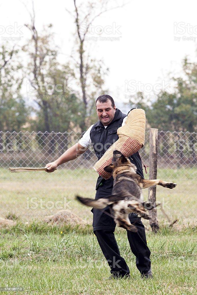 Dog Training stock photo