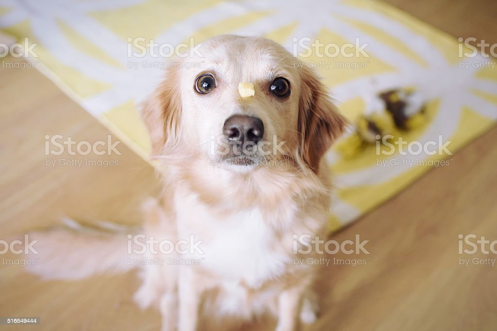 Dog training stock photo
