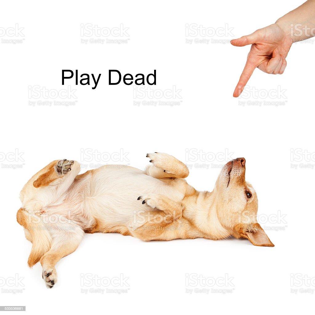 Dog Training Play Dead Command stock photo