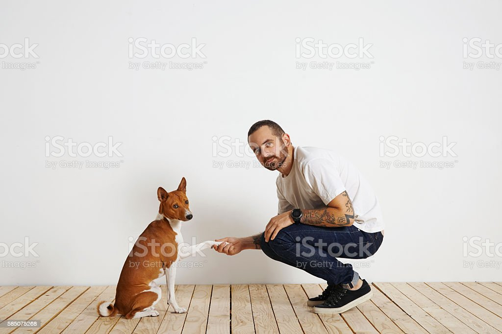 Dog training process at home stock photo