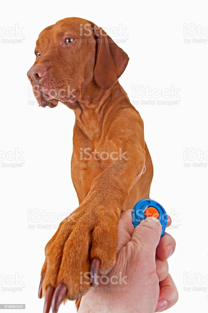 dog training with positive reinforcement stock photo