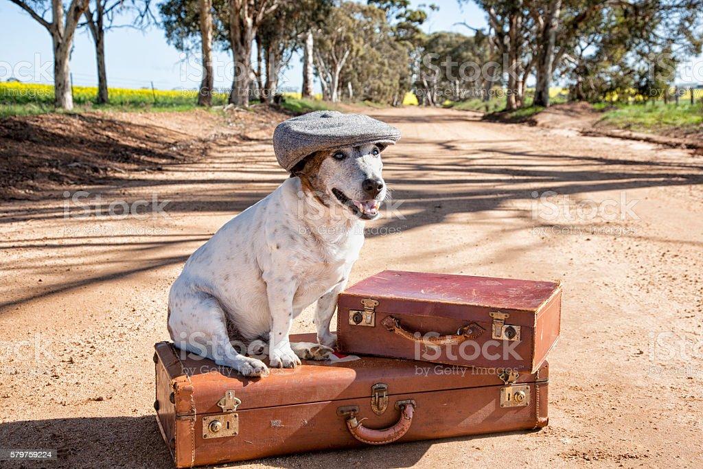 Dog Traveler stock photo