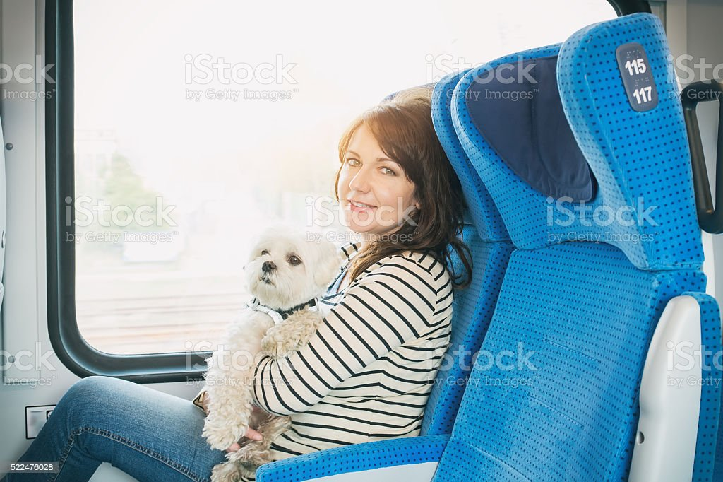 Dog traveling by train stock photo