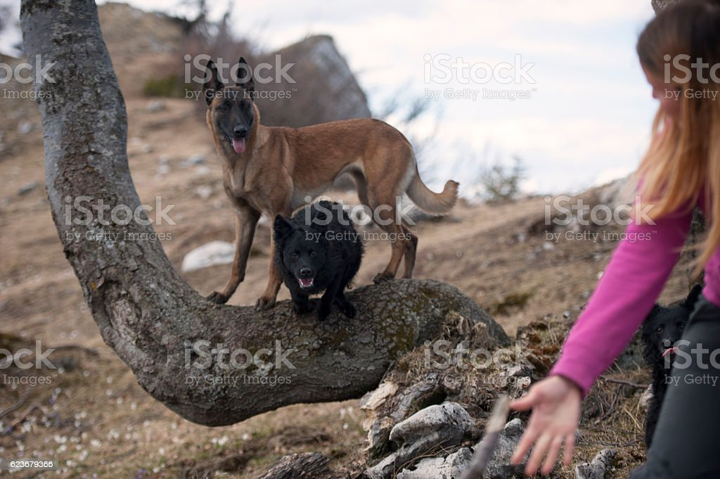 Dog tricks in nature stock photo
