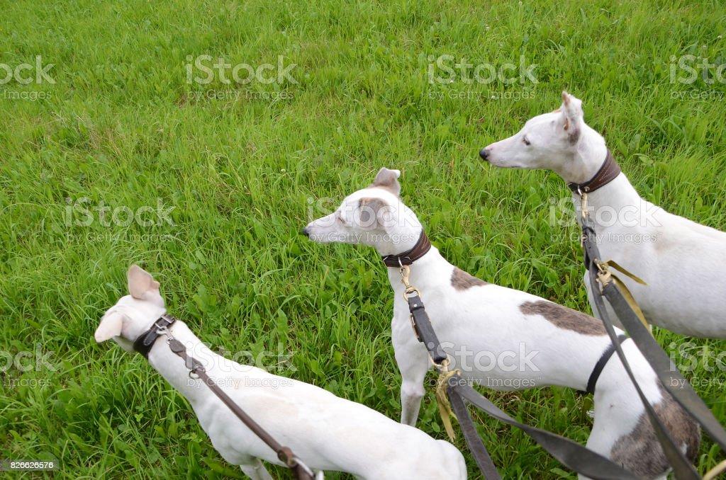 Dog Trinity stock photo