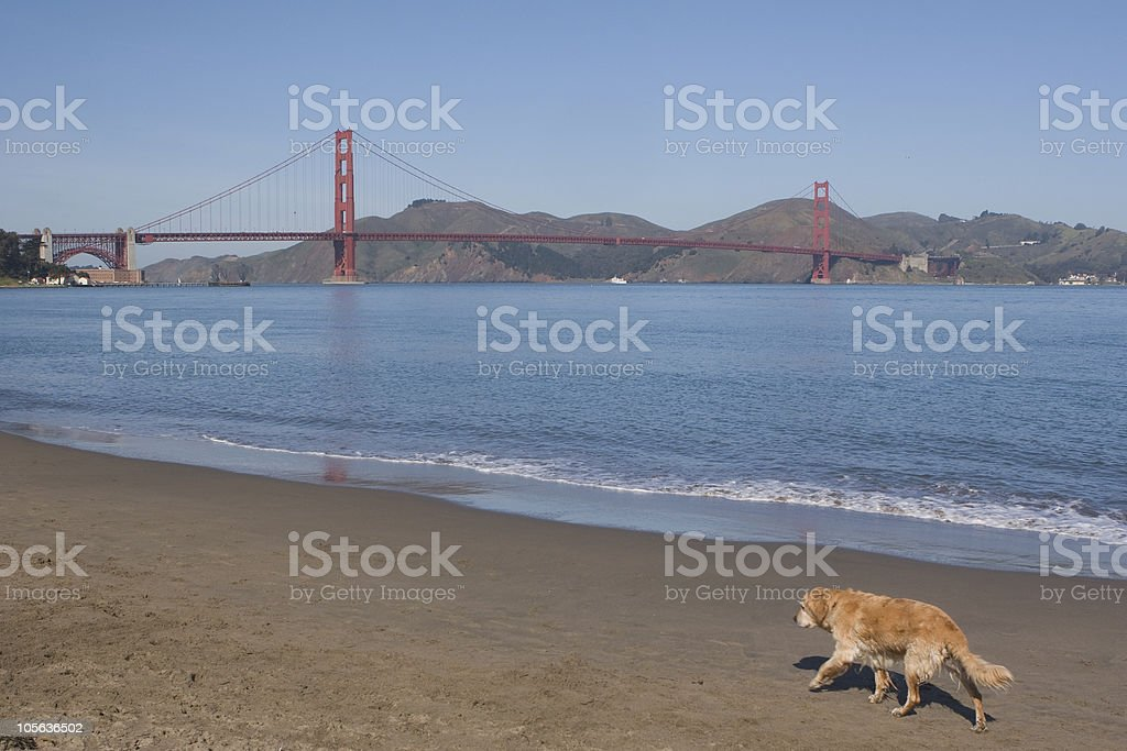 Dog Trot royalty-free stock photo
