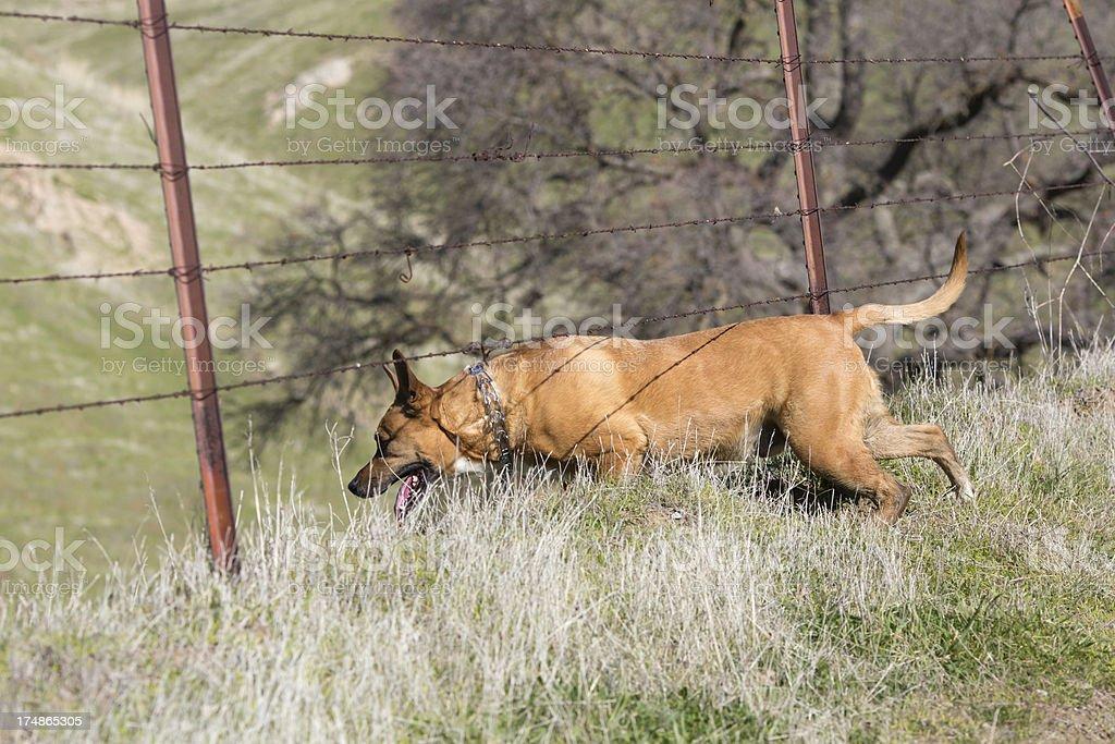 Dog Under the Fence royalty-free stock photo