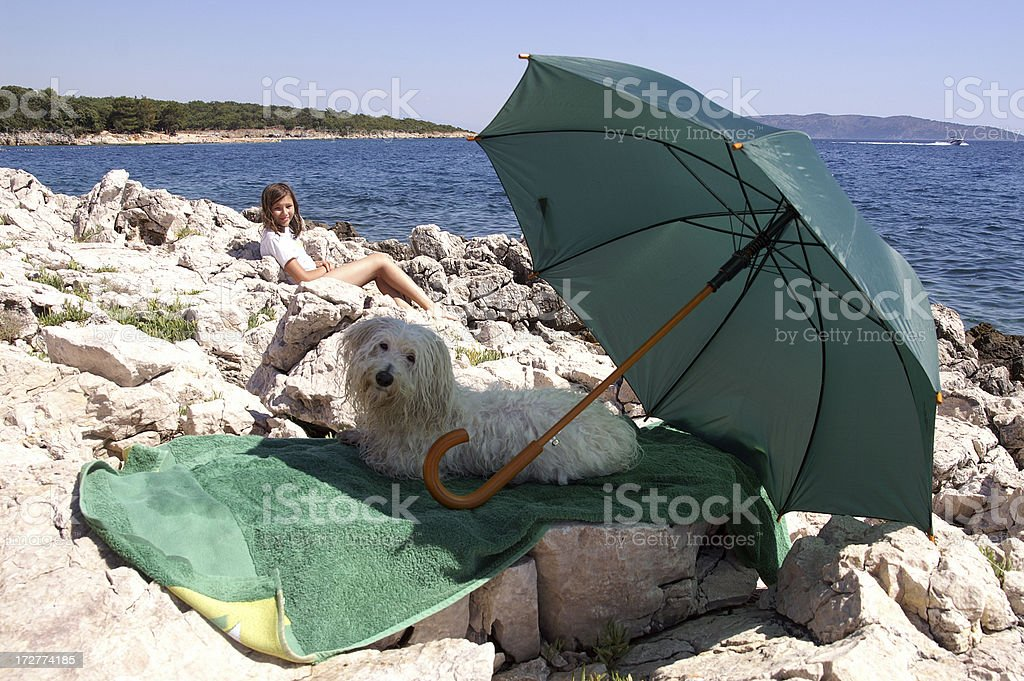Dog under umbrella royalty-free stock photo