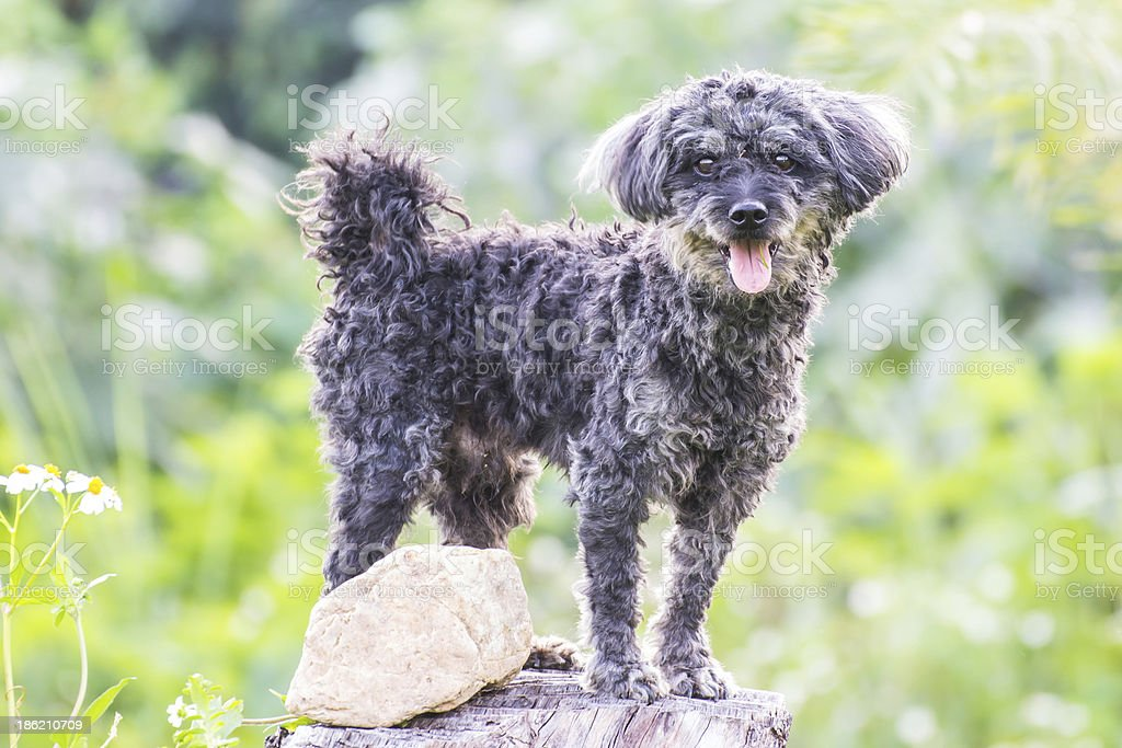 Dog uses a tree stump as look stock photo