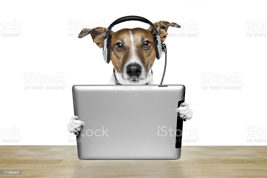 dog using a tablet pc with headset stock photo