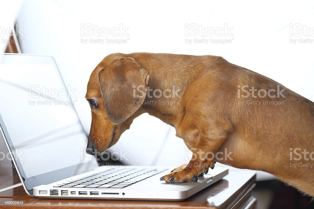dog using computer stock photo
