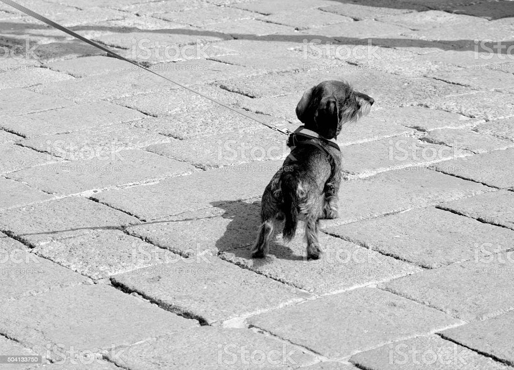Dog Venice Lagoon waterside stock photo