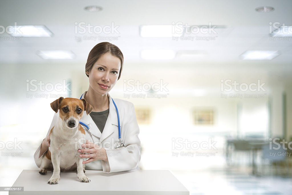 Dog vet clinic stock photo