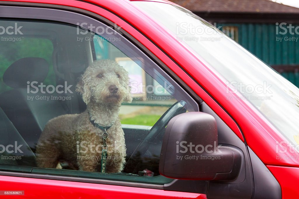 Dog waiting for his owner stock photo
