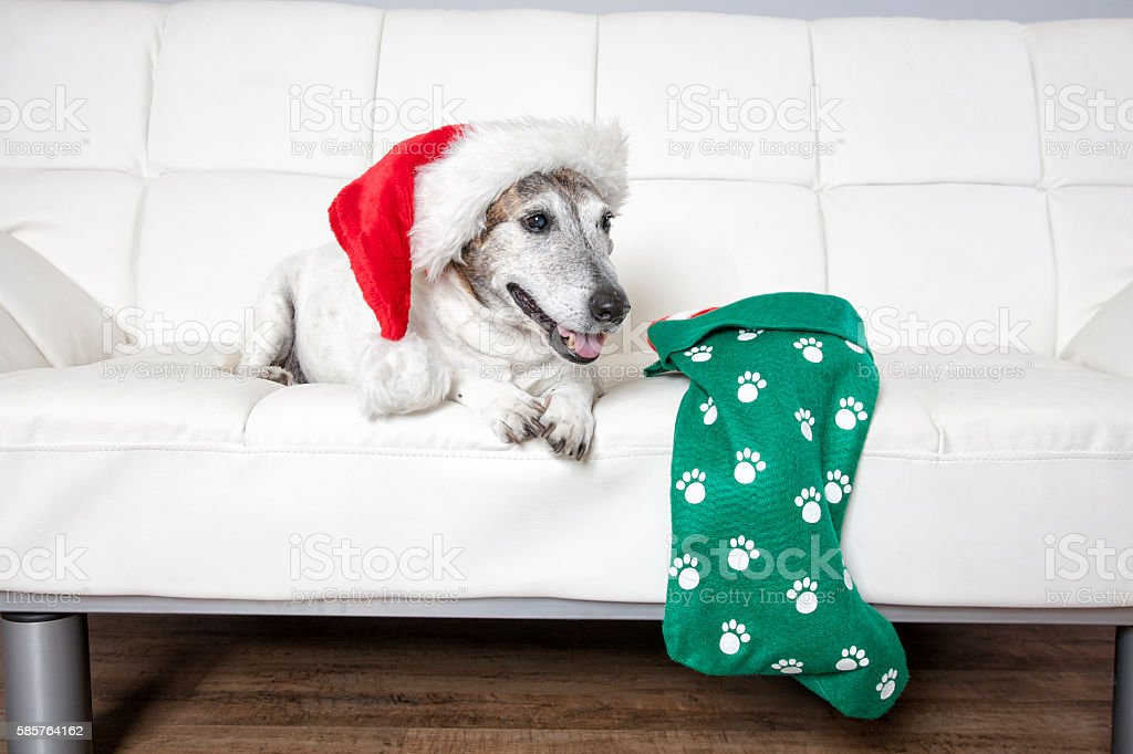 Dog Waiting For Santa stock photo