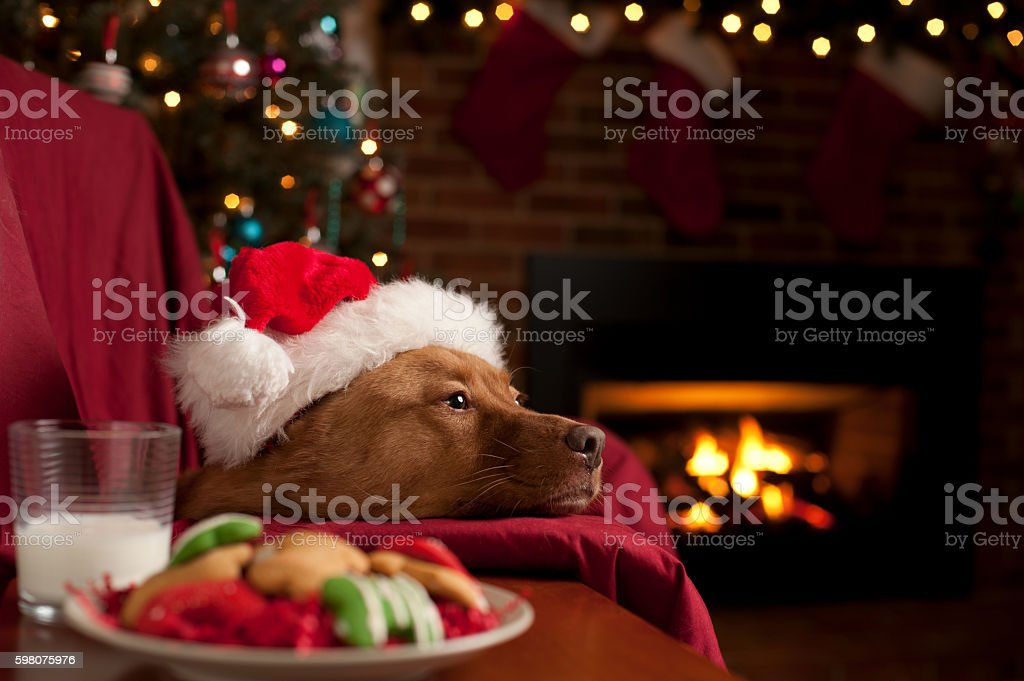 Dog waiting for Santa stock photo