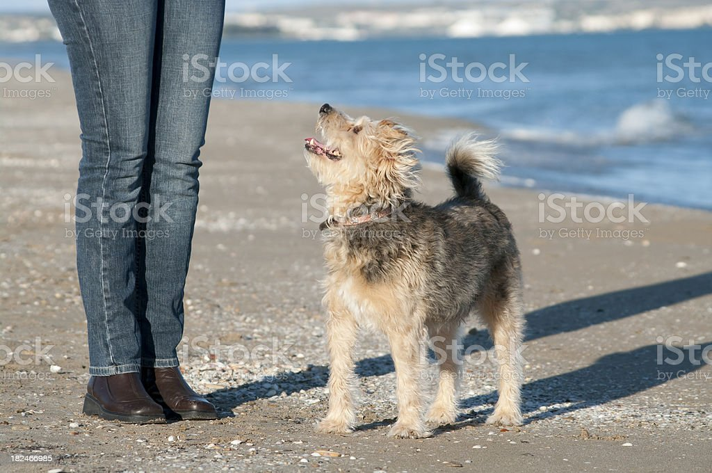 Dog waits for treat from owner on beach walk stock photo